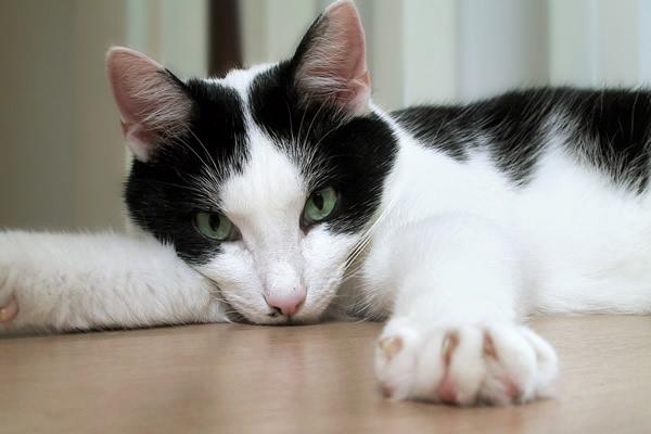 Jak zneutralizować zapach kociego moczu ?