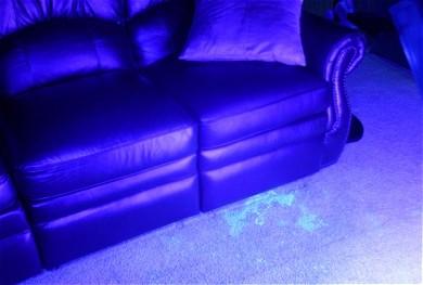 Jak wykryć plamy moczu na dywanie i zneutralizować ich zapach?